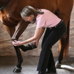 Diagnosis Lameness Evaluation